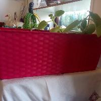 samozavlažovací truhlík na květiny