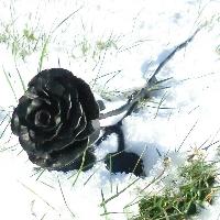 Kovaná růže s lístky
