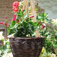 Proutěný květináč závěsný -